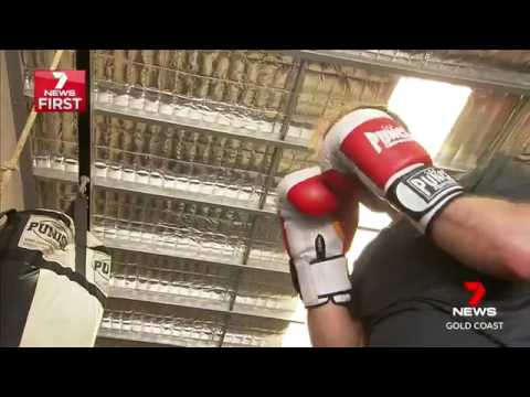 Heart Surgeon Chooses Punch Boxi